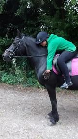 1-2 well schooled, well behaved 14.2 ponies for share, miles of off road hacking, lessons - weekdays