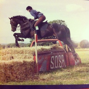 Stunning 16.2hh Thoroughbred for part plan/share