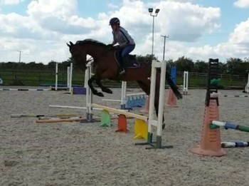 Stunning 16hh All-rounder eligible for ROR
