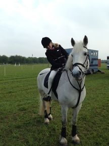 Kind and capable 14.3 hh gelding
