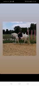 13.1hh newforest mare for part loan