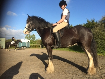 c14.3hh 8yr old gelding, family, pony club, RC, all-rounder
