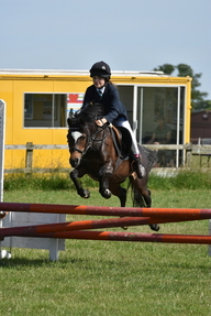 Showjumping Super Star!! 12.2 Welsh Section B Mare 11 Years old