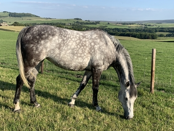 Beautiful all rounder for sale