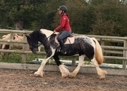 Stunning 15hh mare with the WOW factor