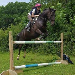 Caligina (Gina) Cross Country etc. pony