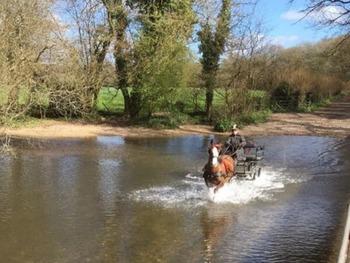 Ride and Drive reg welsh sec C pony