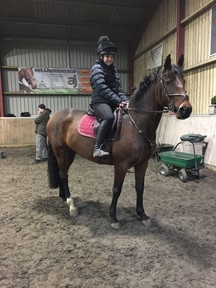 Lovely 15.3hh For Sale