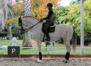 Fabulous Schoolmaster PSG Stallion