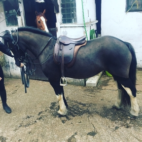 12.2hh 5year old pony