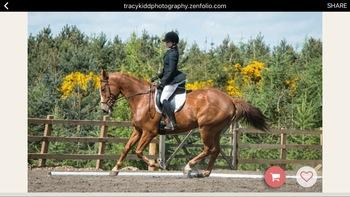 8yr old 16.2 dressage mare