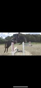 Hunter\jumper prospect for sale
