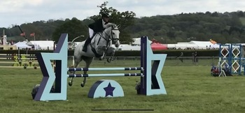 Super Smart Belgian Warmblood Mare