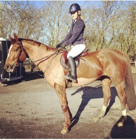 SOLD 16.1h Irish Sport Horse Mare