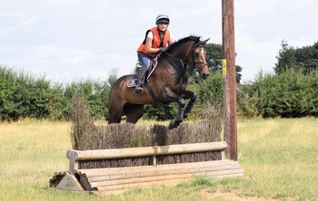 16hh 5 year old mare - star of the future