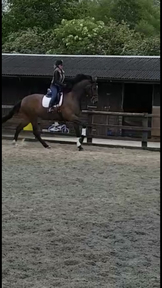 4 yr old 17.1+ Recently backed genuine mare
