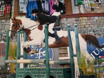 Sweet competitive riding club allrounder 15h skewbald mare