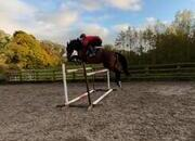 Serious Competition Sports Horse for Sale