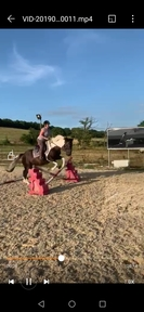 Beautiful 15.3 mare