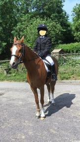Welsh B Gelding For Sale Lead Rein or Second Pony