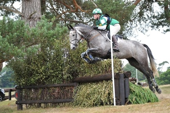 Clover Flyer - Outstanding ISH 16.3hh Mare
