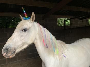 Fantastic 2nd pony