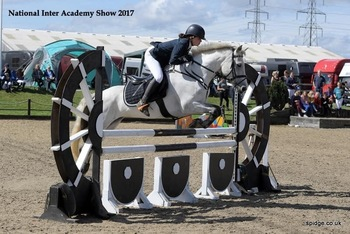 Super 14.2hh pony club/bs/all rounder