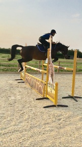 Lovely allrounder / showjumper/ teen coming off ponies