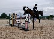 Superb Schoolmaster! Proven Event horse/show jumper/working hunter!