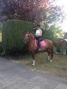 New Forest mare for sale