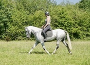 Sane and sensible allrounder!  Ideal RC/PC/Grassroots Eventing!
