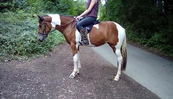 3 yro coloured mare. Jigsaw.