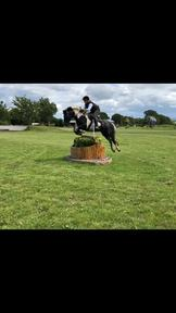 Coco 14'1 hh eventing pony 7 year old