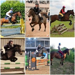 amazing 13.2 pony  bsja/pony club