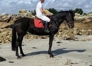 15.2hh Confidence giver ISH all-rounder for sale