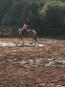 14.1hh couriers gelding