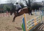 Scopey 5 year old 16.1hh ISH Mare
