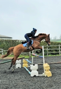 Sad sale of much loved, talented horse
