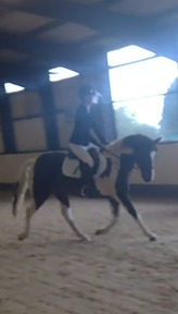 Ideal PC/Allrounder 14.1hh
