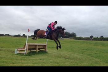 14.2hh Welsh Cob 'Harry' 12yrs For Loan