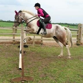 15.2 coloured gelding