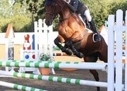 Super jumping / all-rounder superstar 14.2hh