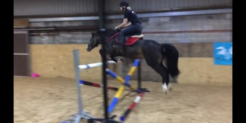 14hh pony for loan
