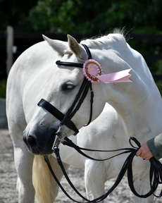 15'2 ID Mare : Safe, confidence-giving all rounder
