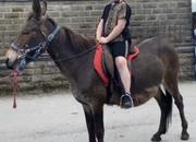 Jack-Jar 13.2 Riding Mule