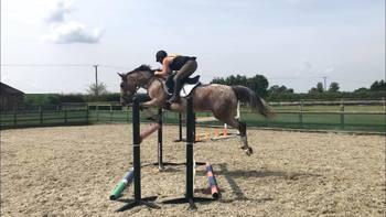 Cracking BS Amateur horse