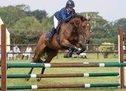 Smart Allrounder/Hunt mare