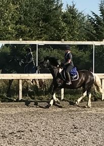 Star, a delightful 8 year old mare