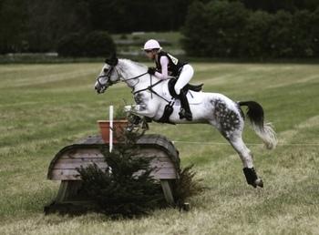 15.3 Event horse