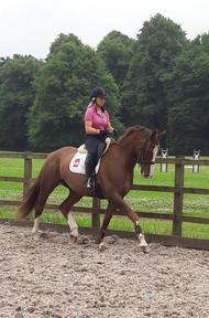 Stunning 16.3hh Dressage Horse